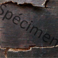 Texture image écorce de bouleau noir téléchargeable à monprofdesigner.com
