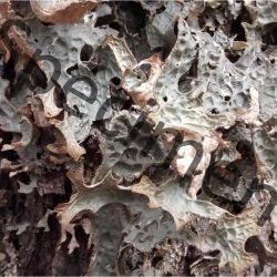 Texture de champignon téléchargeable à monprofdesigner.com