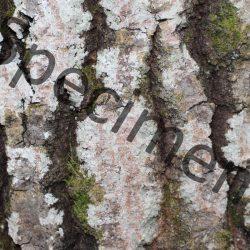 texture téléchargeable à monprofdesigner.com